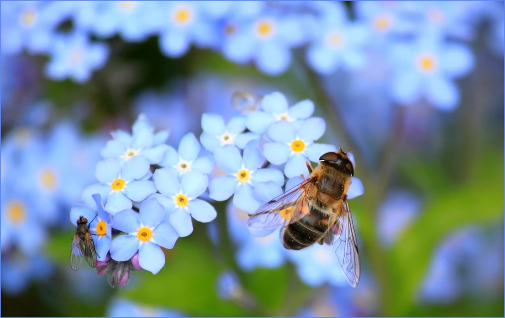 Forget-me-not: The impact of memory loss in dementia